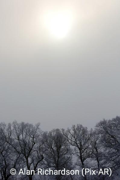 3_Snow on Trees_AR