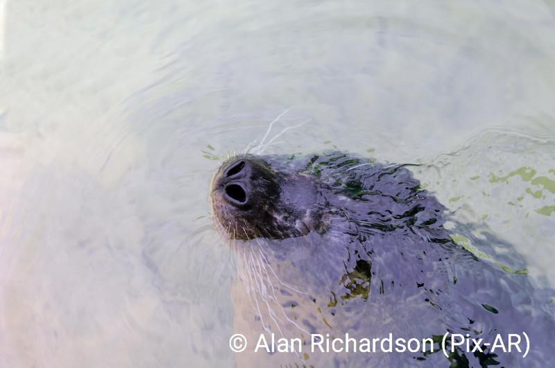 Seal_AR