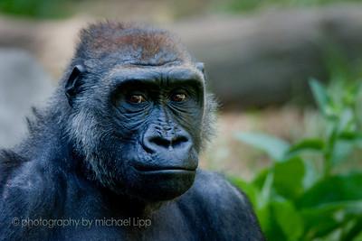 2009-07-31_zoo-9