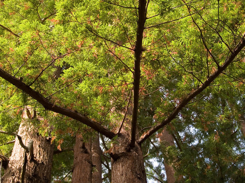 Trees_RobinsonCyn 17