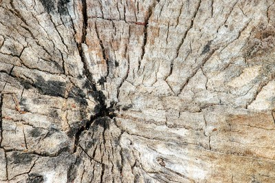 Tree Stump Abstraction
