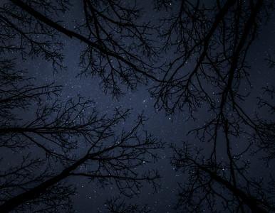 Treestars