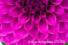 5_Flower_AR