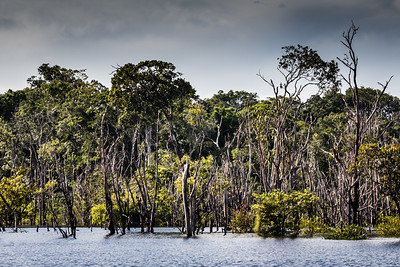 Amazon Jungle - Anavilhanas national park