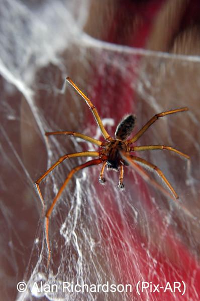 1_Spider_AR