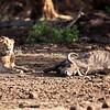 Amboseli<br>Kenya<br>2010