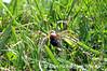 4_Spider_AR