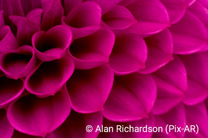 4_Flower_AR