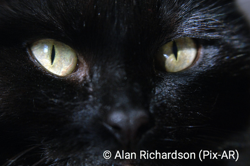 Cats_Eyes_AR