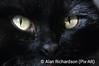 Cats_Eyes_AR