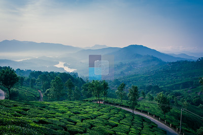 View of Tata Tea Plantation Overlooking Anayirakal dam, Munnar, Kerala, India