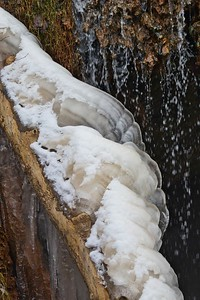 The Grotto // Turkey Tail Ice