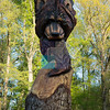 A Lion carved on a tree, Leesburg, Virginia