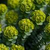 Butchart Gardens, Victoria, BC Canada - Pentax K-7, K85mm