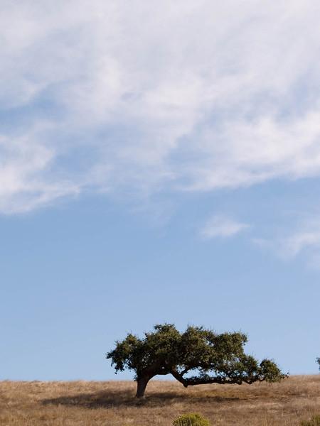 Tree With Sky 1