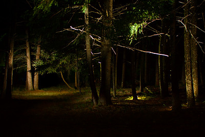 307/365 Forest Glow - © Simpson Brothers Photography