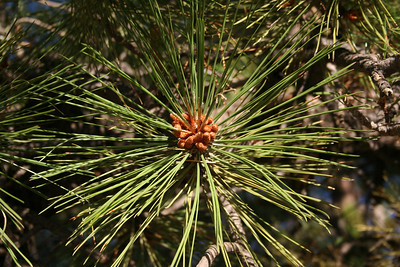 Bryce Canyon-50