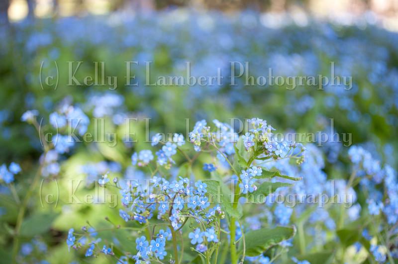KL_May12_0031
