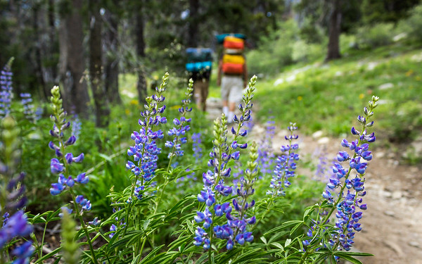 Backpacking the Pacific Crest Trail