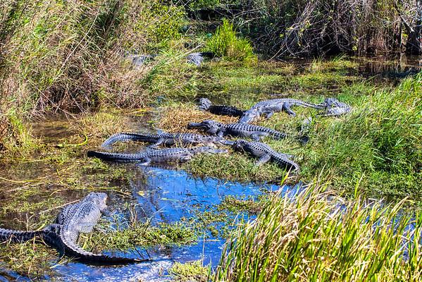 Gatorscape