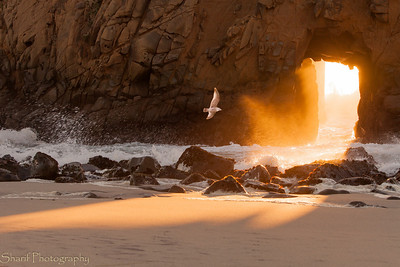 A seagull soars around portal rock at sunset.