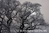 1_Snow on Trees_AR