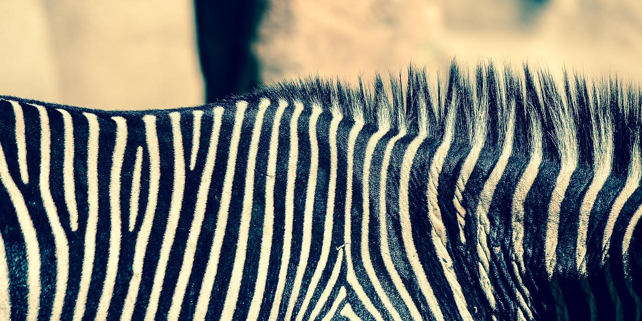 Zebra Lines