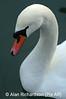 1_Swan_AR