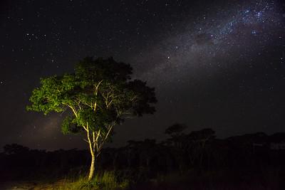 Lusaka Nights