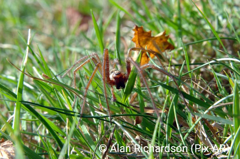 5_Spider_AR
