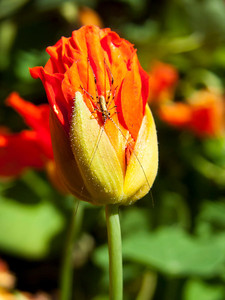 Insect On Flower 5_10