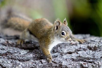 Timid squirrel.