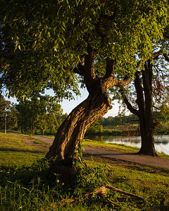 Portrait Tree