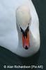 2_Swan_AR