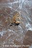 3_Spider_AR