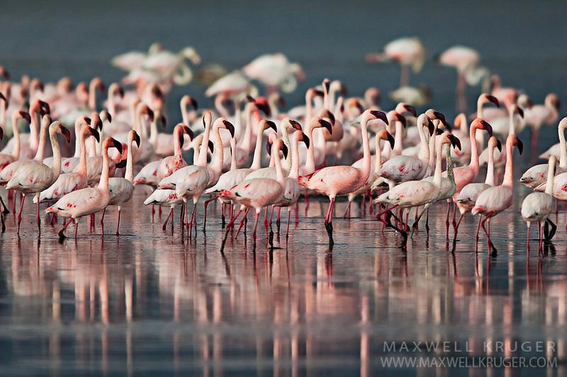 Lake Nakuru<br>Kenya<br>2010
