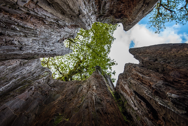 Tree Hollow!