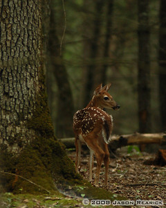 Fawn still in spots in Cades Cove, TN