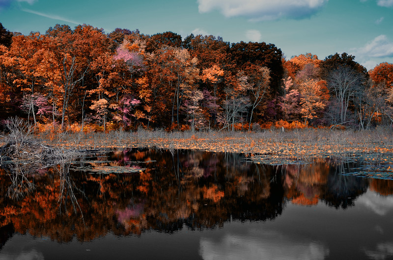 Trees in autumn reflected in a pond, with a blue sky.  CT State Parks.