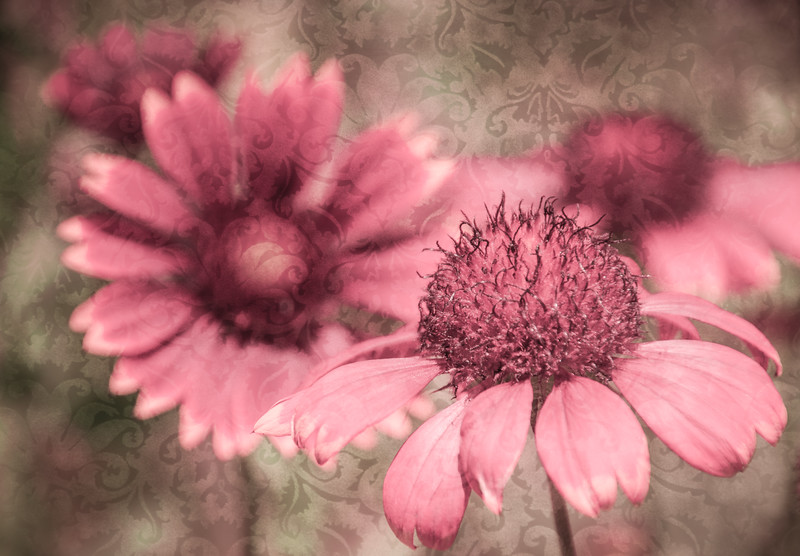 Pink Petals with textured background