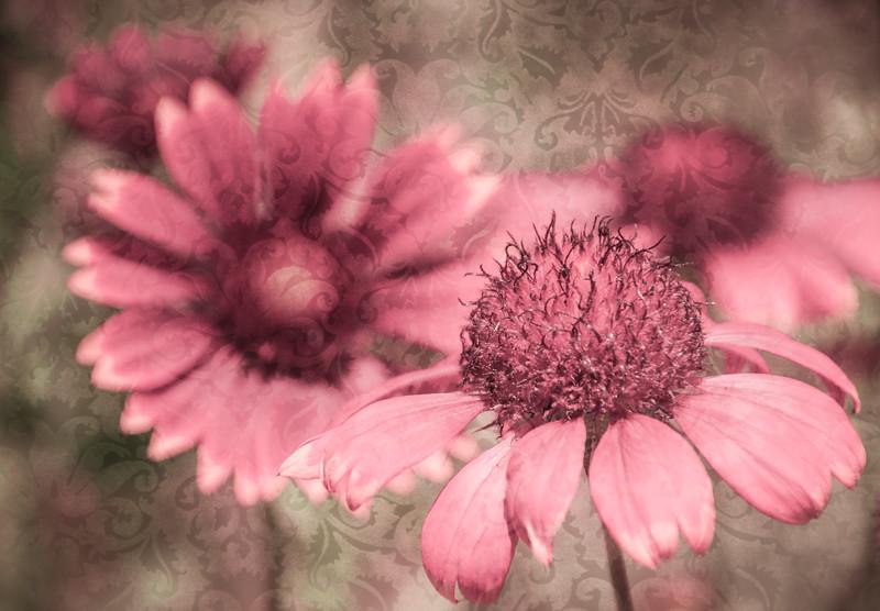 Pink Petals with textured background