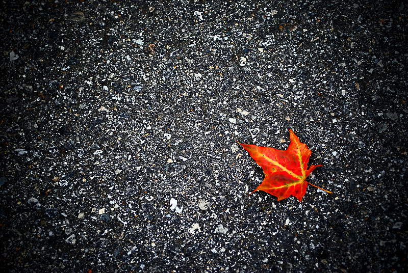 An orange fallen leaf on the ground.  Autumn in CT.