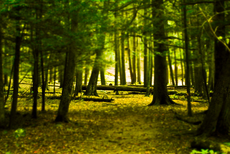 A path through the forest floor, with a green hue.  CT State Parks.