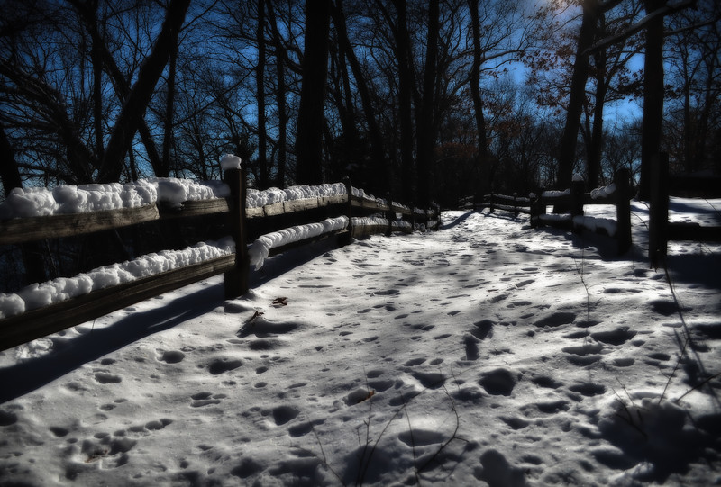 Snowy moonlit path at a State Park in CT