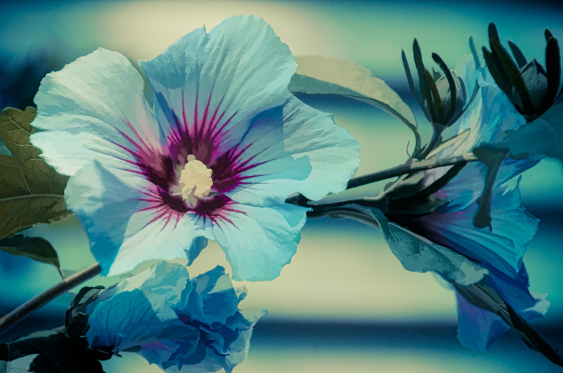 Blue Flower with painterly effect