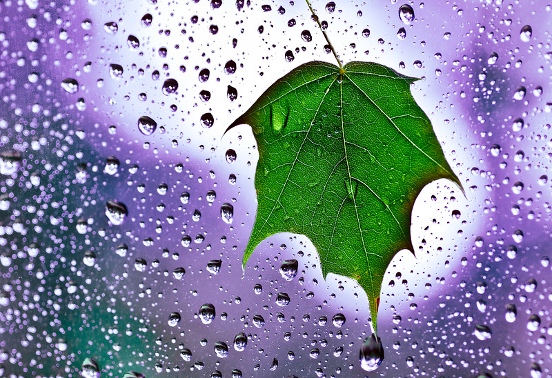 Leaf blown against window during Hurricane Irene 2011 CT
