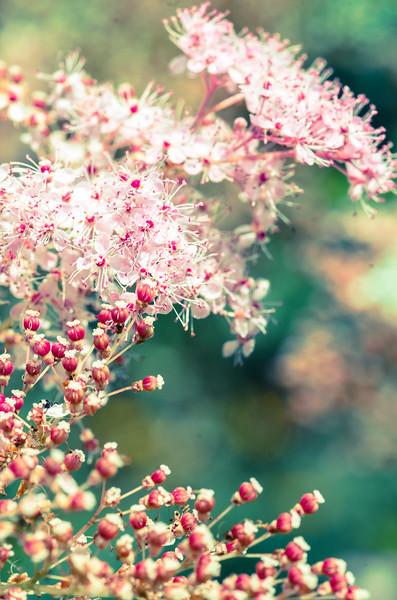 Pink/Green Buds