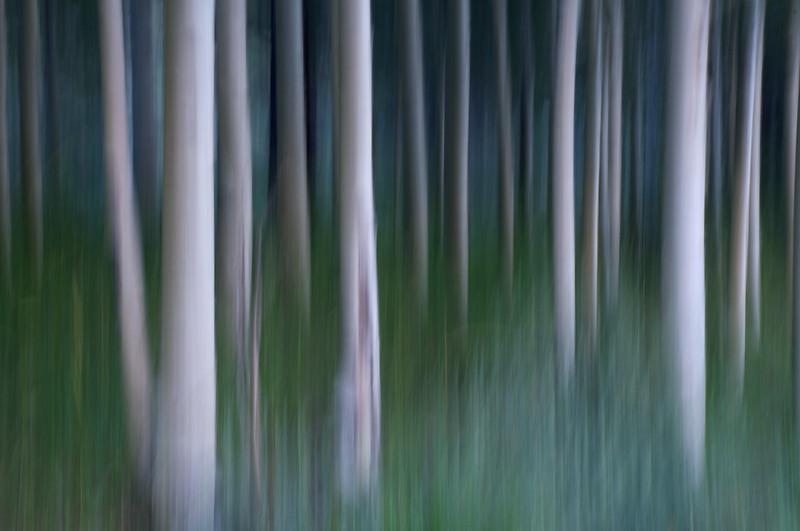 Forest Art 3