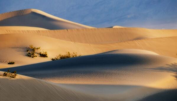 Sahara Feel*