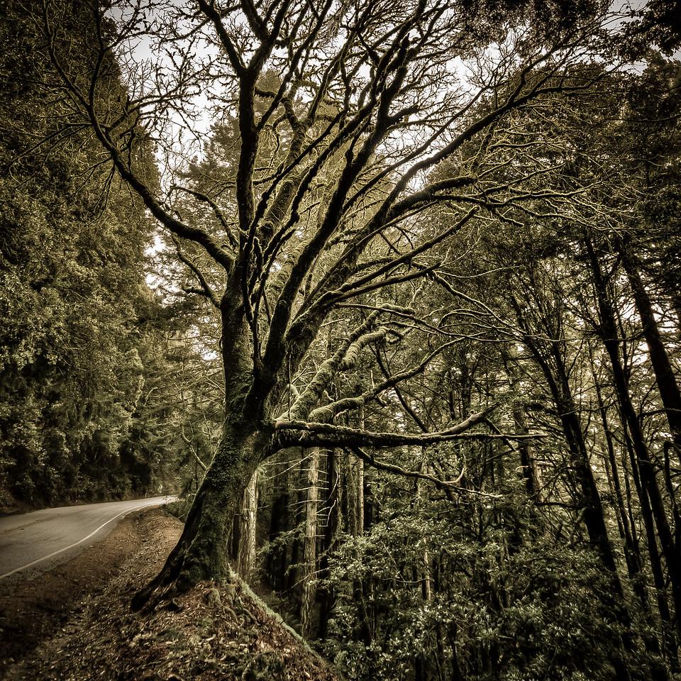 of long fingers and steep shoulders | woodside, ca